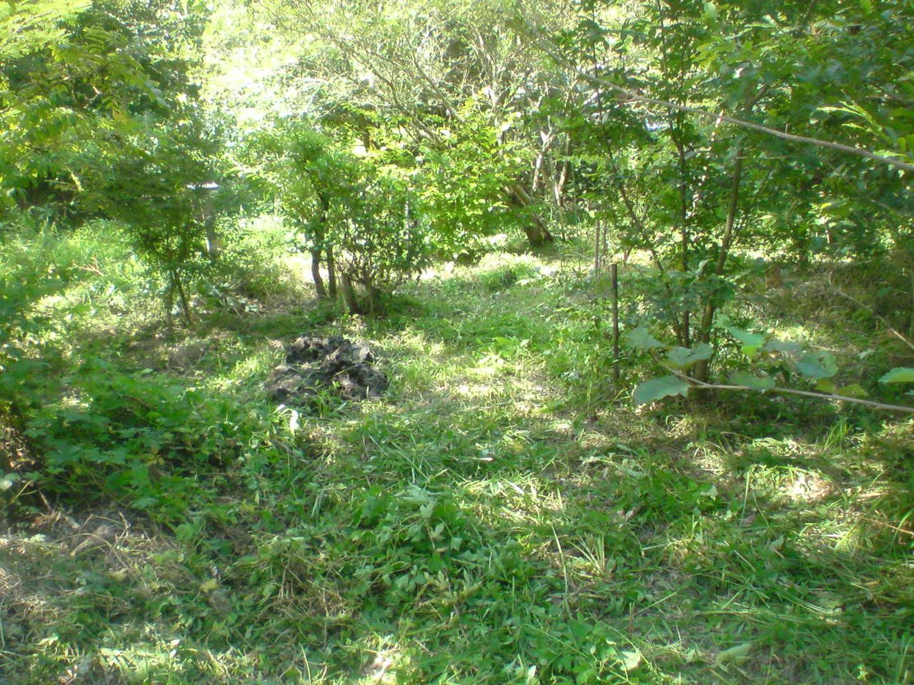 食草園の刈り払い - トロルお爺の木aワーカー林住記