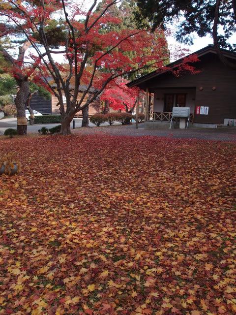 11月4日園内風景(1)