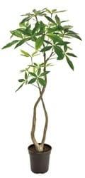 パキラ フェイクグリーン 人工観葉植物造花