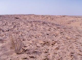 国連砂漠化対処条約(UNCCD)第9回締約国会議(COP9) - アラシャン通信(オイスカ阿拉善砂漠生態研究研修センター便り)