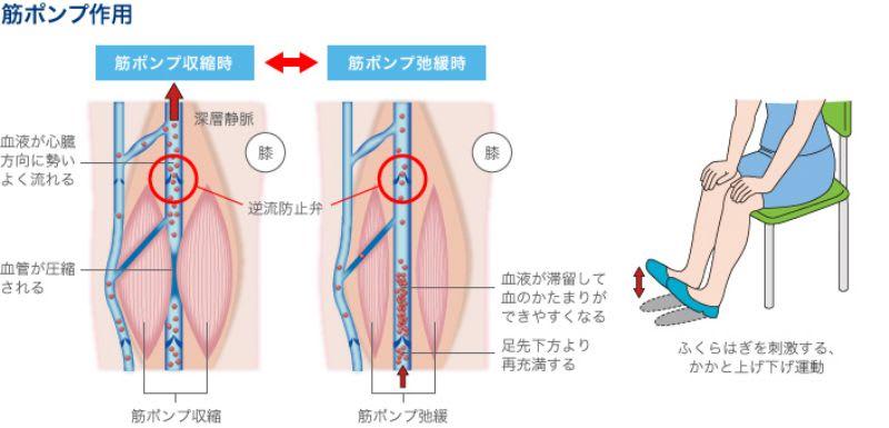 献血と筋ポンプ - 扁鵲(へんじゃく)のつぶやき
