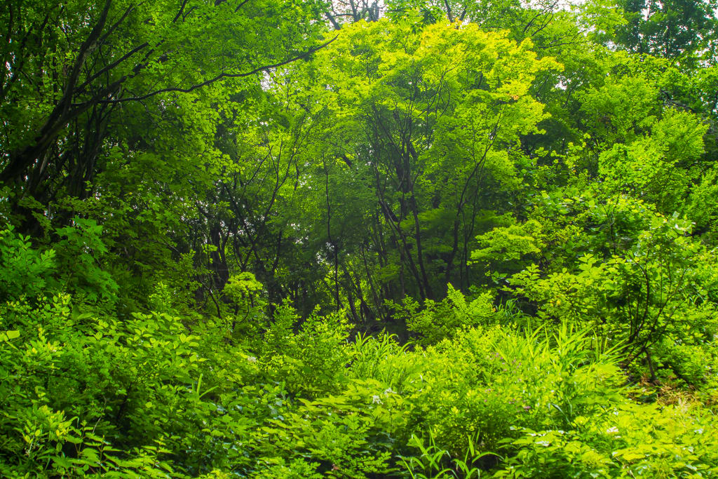 ヒサマツミドリシジミの生息地