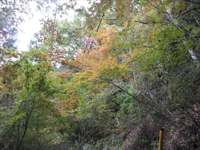 京大坂道の画像 p1_17
