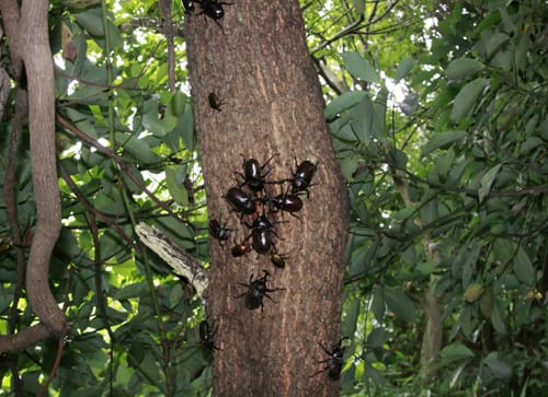 クヌギの木 だが、クヌギの木は人気だ! まるで「やらせ写真」のようだ!... ブログタイトルが頻
