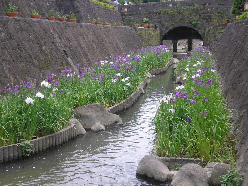 玉名の花菖蒲を見に行った時に気になる物がありました それは、花菖蒲の咲く...  熊本・天草釣り