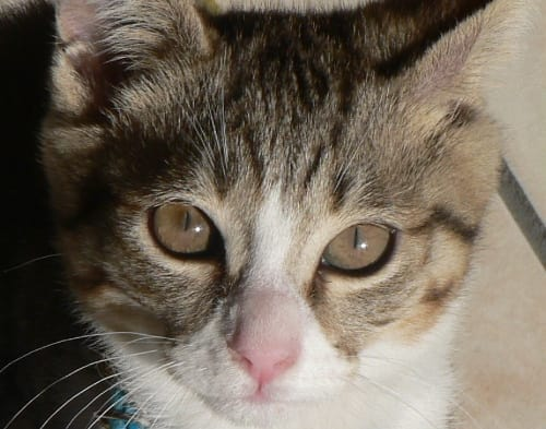 半幅帯 6色 猫模様 ねこ 赤青緑紫紺黒 リバーシブル 小袋帯 ロングサイズ 4m 長尺 浴衣 着物 和装小物 ...