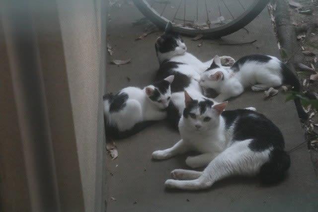 盗撮、その後の外猫ファミリー☆