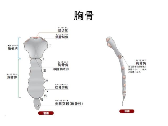 医療放射線(撮影技術)