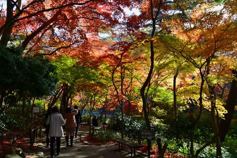 有馬温泉瑞宝寺公園の紅葉 2013年11月19日