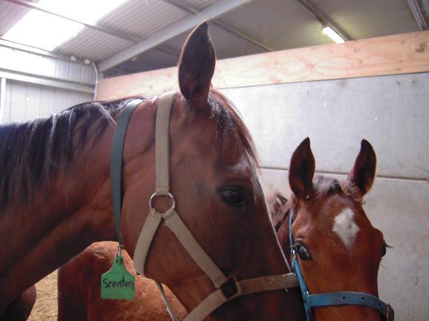 馬の親子の写真