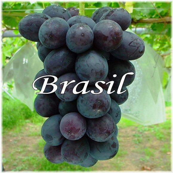 ブラジル ぶどう