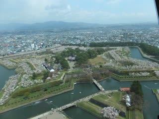 桜の五稜郭