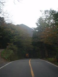 県道158号