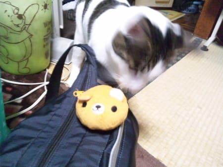 運んでくると ポトリ 運んで来ては ポトリ 「なげてくれにゃ!」 すぐ... 猫ピッチャー・・・