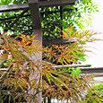 2011-6-4-17 ツル性植物
