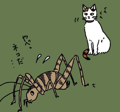 カマドウマ猫が天敵?