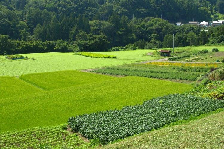 六合赤岩・河岸段丘の耕地