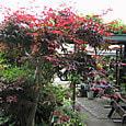 2011-6-4-29 ツル性植物