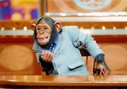 チンパン・<b>ニュース</b>・<b>チャンネル</b> - ---テレビ日記