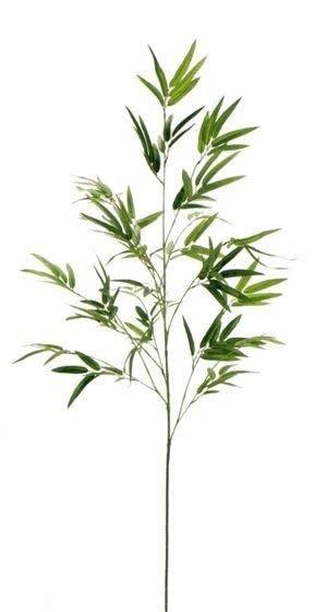 竹 バンブー 笹
