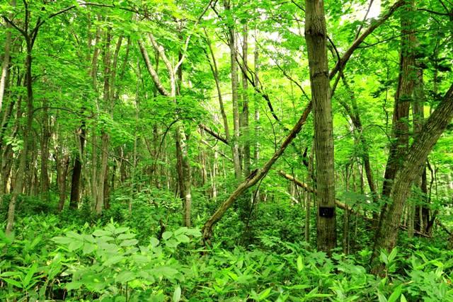 野幌森林公園 - 地図のない旅