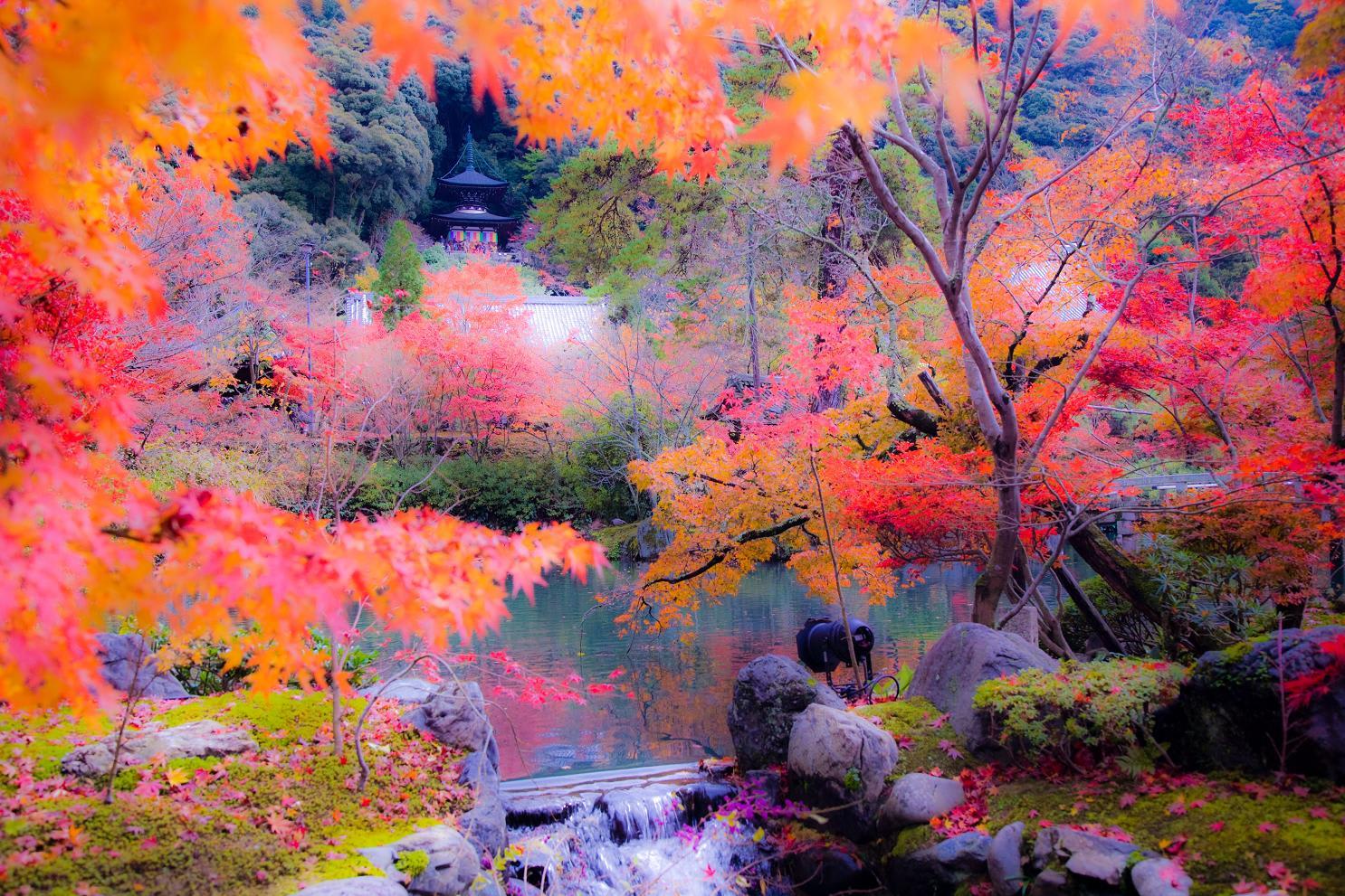 京都観光Navi:赤山禅院