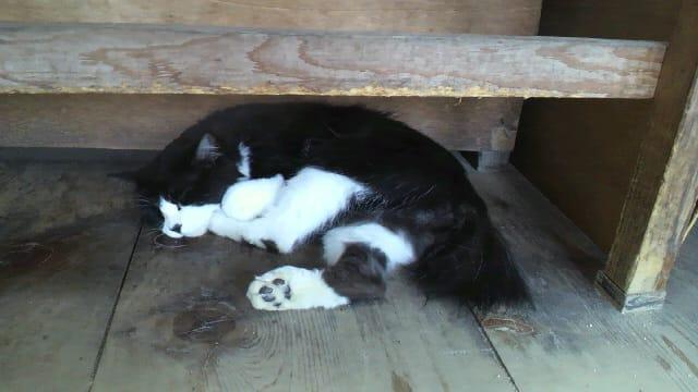 文殊堂の猫〓