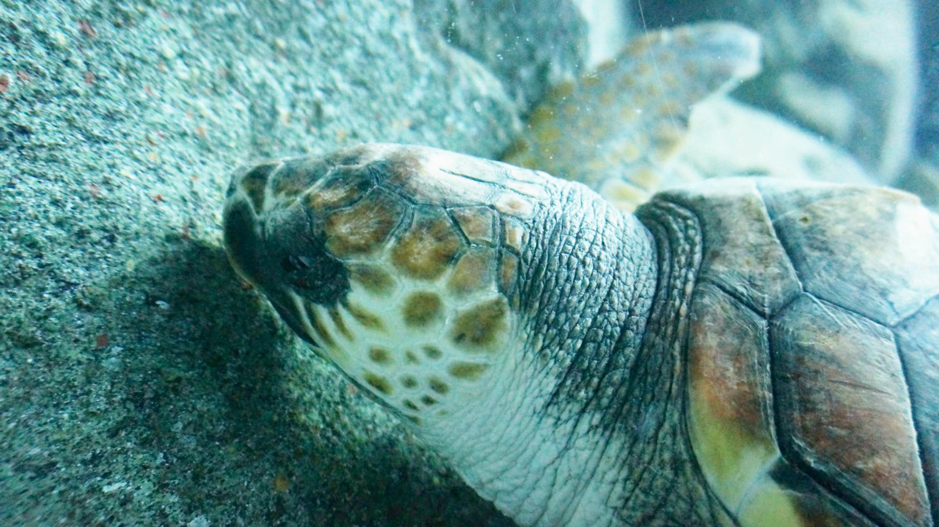 ウミガメの画像 p1_17