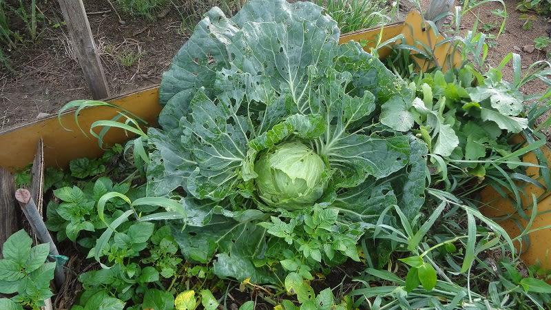 野菜作りに挑戦