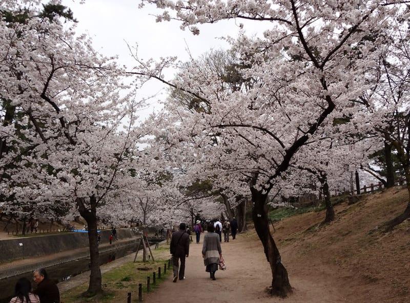 Along_the_syukugawa