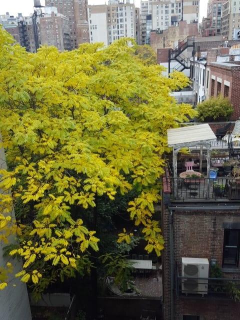 黄金に輝く木