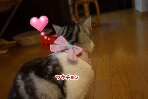 イケイケ女子の雛祭り~♪♪