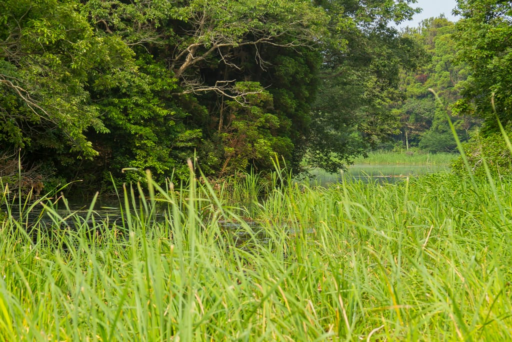 アオヤンマの生息環境