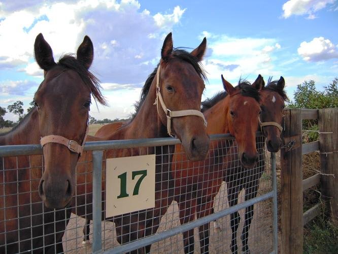 牧場の仔馬たち