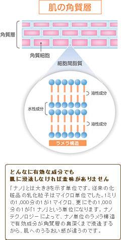 細胞間脂質とは・・・・ 肌の角質層にあり、肌の水分蒸発を防ぐ保湿機能や... リニューアルした「