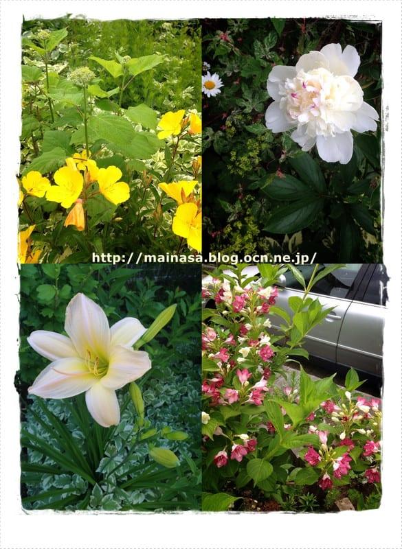 Mainasa_garden_3