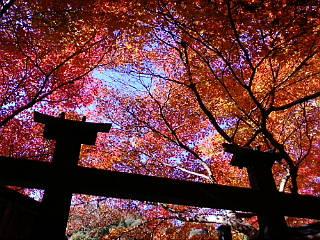 嵯峨野の二尊院に来ています。