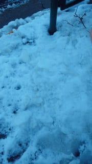 積雪のお陰で…