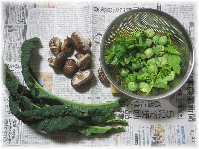 採れたて野菜 2011年2月27日