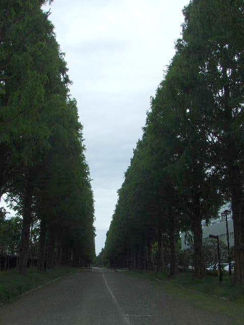 2010_05190011
