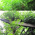 2011-5-28-1 ツル性植物