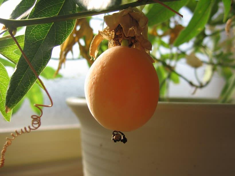 柿のような鮮やかなオレンジ色です♪