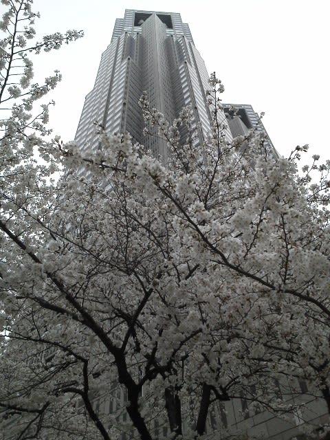 新宿周辺の桜の写真をアップ ...