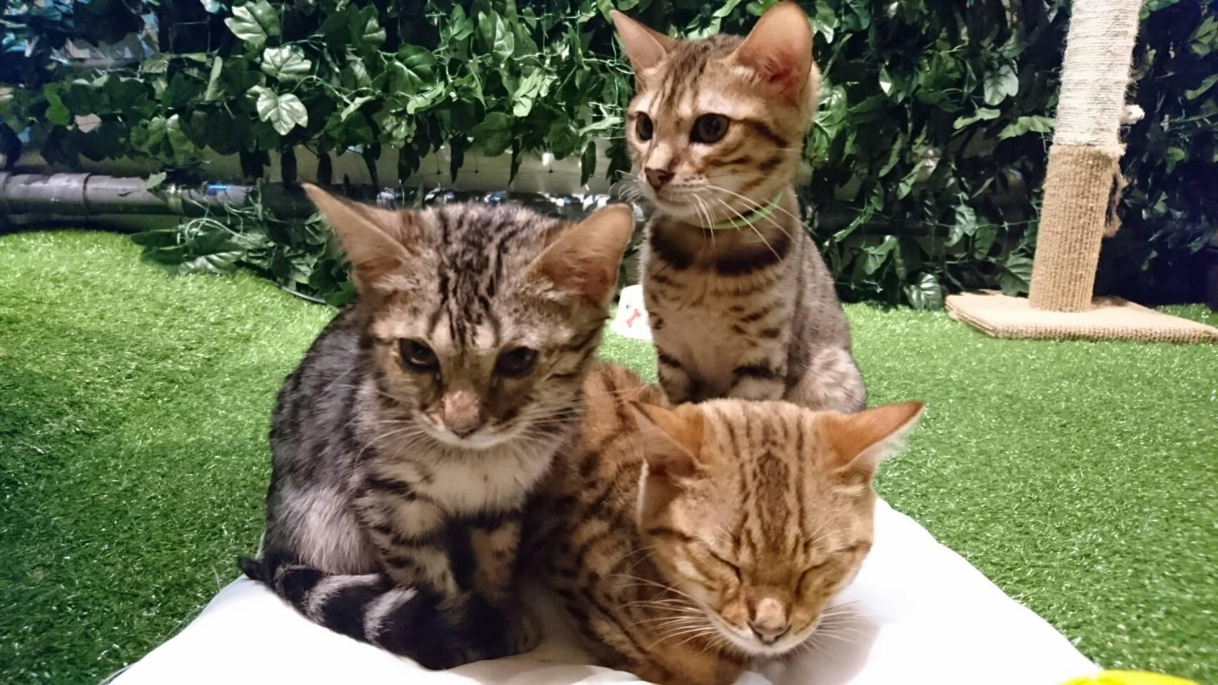 京都ひょう猫の森 - 猫カフェ、ふれあいフクロウ …