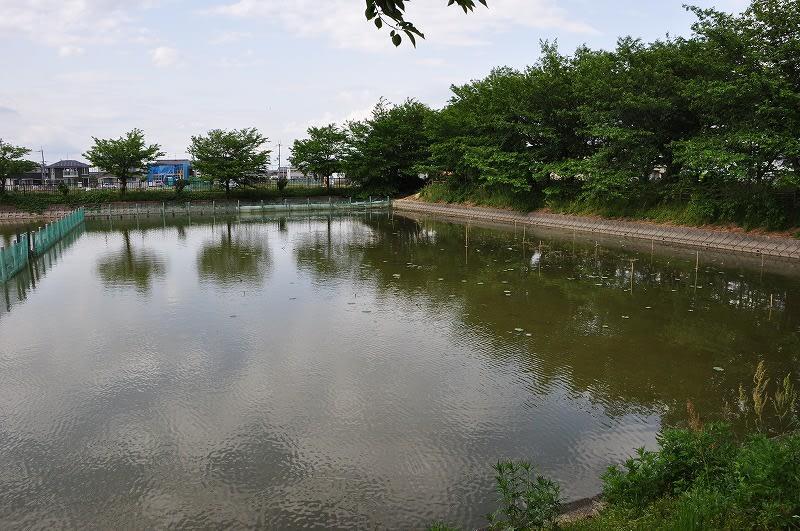 奥田はす池