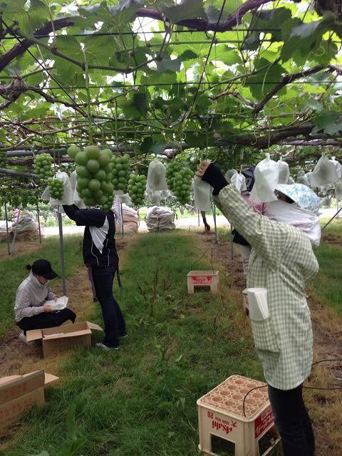 あづま果樹園