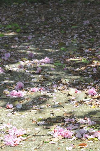残りなく散るぞめでたき桜花 ありて世の中はての憂ければ 詠み人知らず ... 残りなく散るぞめで