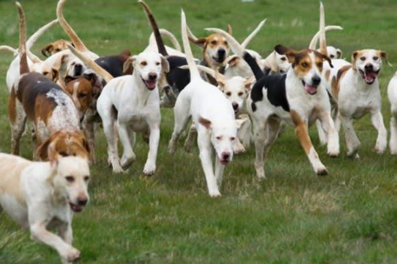 犬 群れ に対する画像結果