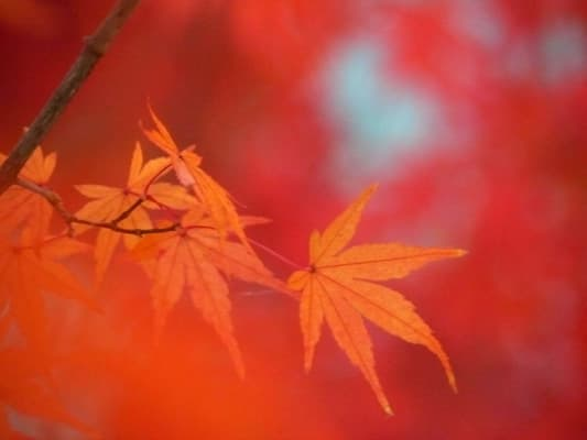 永保寺の紅葉(Ⅱ) - ララの画像遊び ブログ ログイン ランダム 1億総活躍 政府がプラン案示