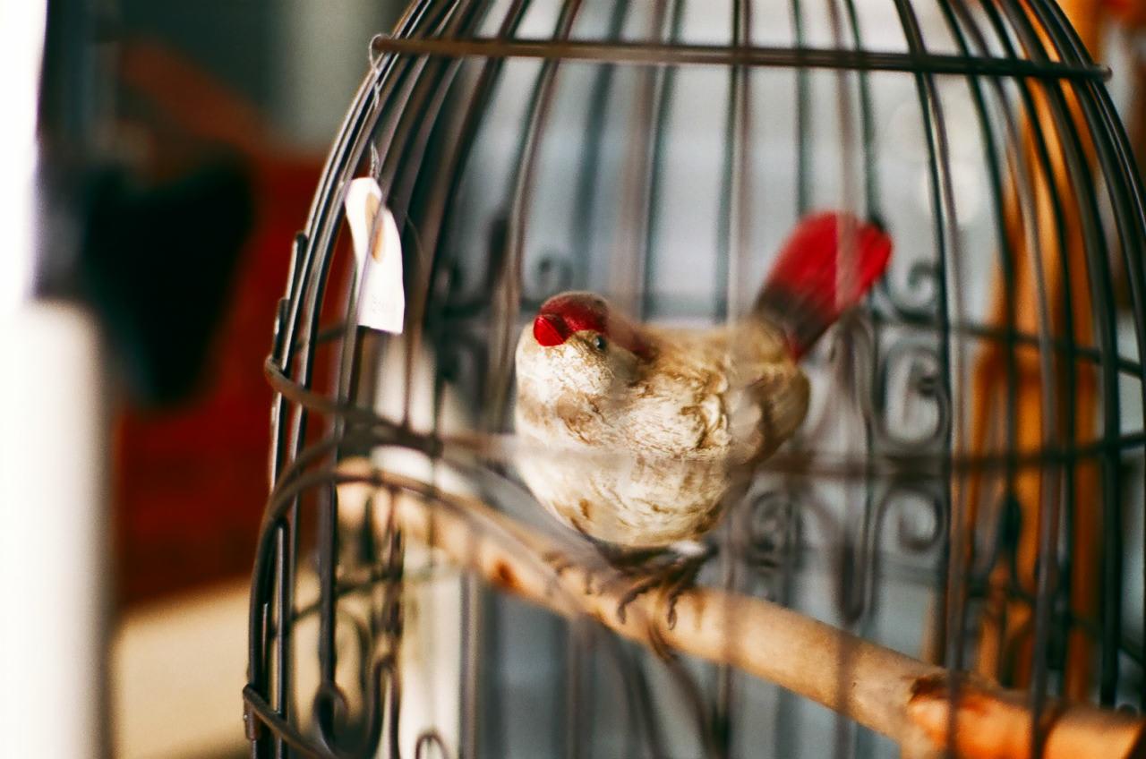 【シノアリス】鳥冠の竪琴の評価 スキルとステータス